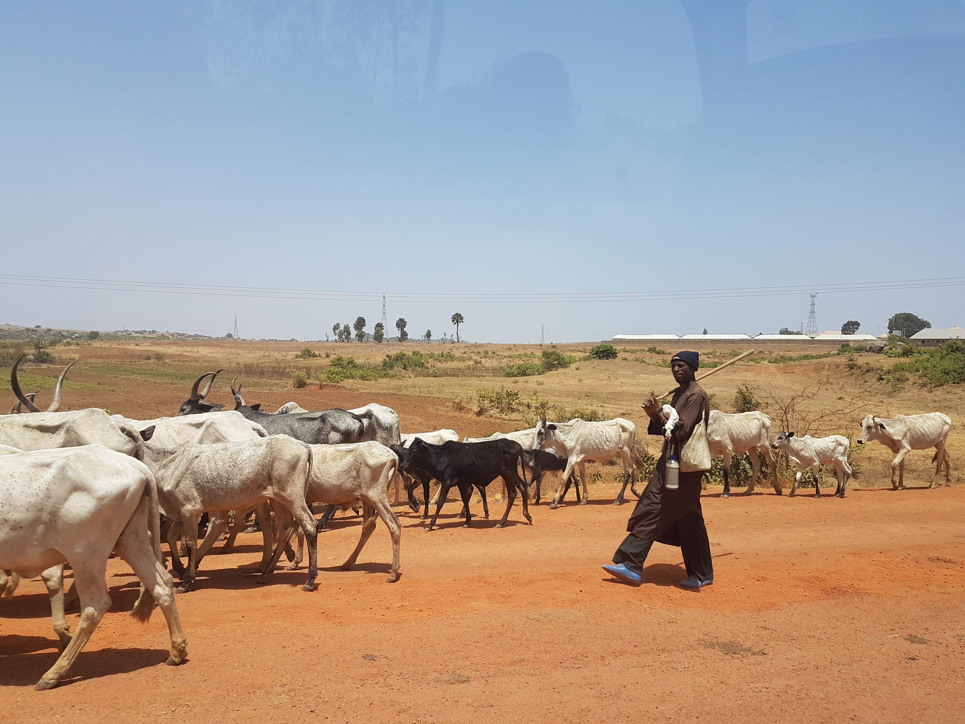 """""""El ganado, por importante que sea, no puede tener un valor superior al de los seres humanos"""""""